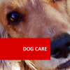 Dog Care 100 Hour Certificate Course