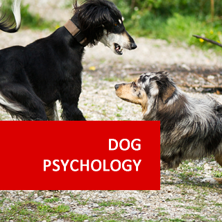 Dog Psychology and Training 100 Hours Certificate Course