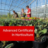 Advanced Certificate In Horticulture (Crops)