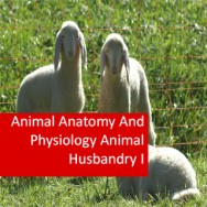 Animal Anatomy And Physiology Animal Husbandry I