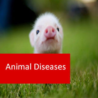 Diagnosing Animal Diseases 100 Hours Certificate Course