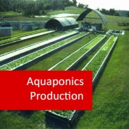 Aquaponics Production