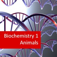 Biochemistry I - Animals (Pre-Medical program)