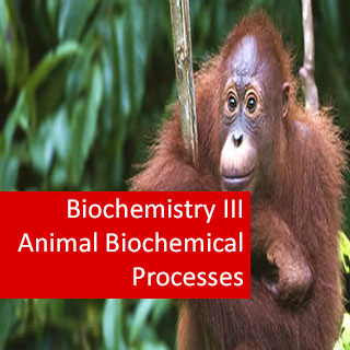 Biochemistry III Animal Biochemical Processes (Pre-Medical Program)