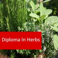 Herbs 600 Hours Diploma