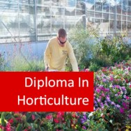 Horticulture (Herbs) 600 Hours Diploma