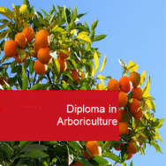 Arboriculture 600 Hours Diploma