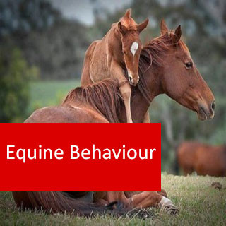 Equine Behaviour 100 Hours Certificate Course