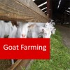 Goat Farming 100 Hours Certificate Course