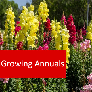 Growing Annuals 100 Hours Course