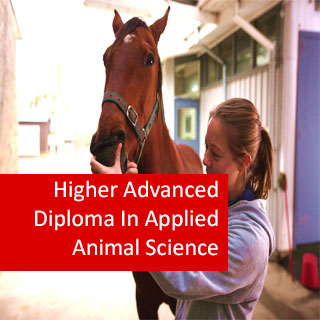 Applied Animal Science 1200 Hours Higher Advanced Diploma