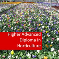 Horticulture - Crops 1200 Hours Higher Advanced Diploma