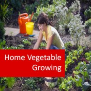 Home Vegetable Growing