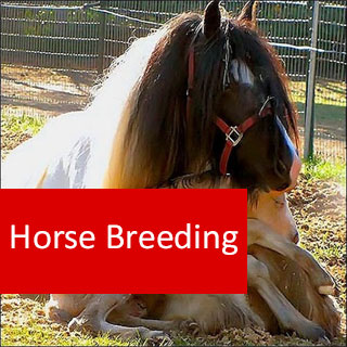 Horse Breeding 100 Hours Certificate Course