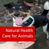 Natural Health Care for Animals 100 Hours Certificate Course
