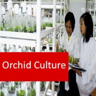 Orchid Culture 100 Hours Certificate Course