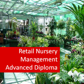 Retail Nursery Management 800 Hours Advanced Diploma