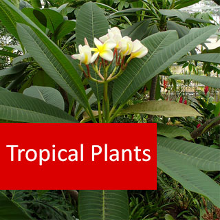 Tropical Plants 100 Hour Certificate Course