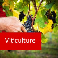 Viticulture BHT220 CLD