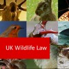UK Wildlife Law: an Introduction 100 Hours Certificate Course
