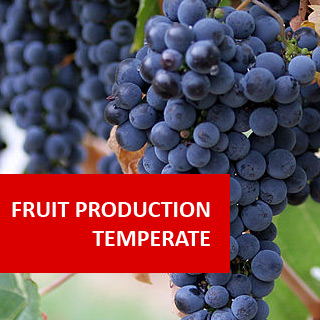 Fruit Production - Temperate Climate 100 Hours Certificate Course