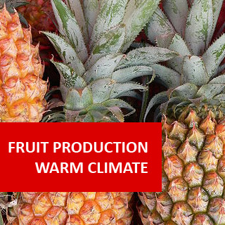 Fruit Production - Warm Climate 100 Hours Certificate Course