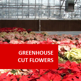 Greenhouse Cut Flowers 100 Hours Certificate Course