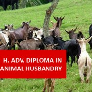 Higher Advanced Diploma In Agriculture - Animal Husbandry VAG002