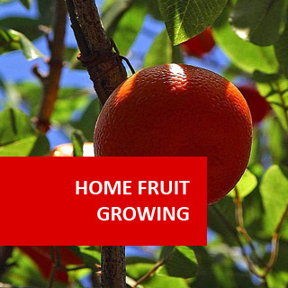 Home Fruit Growing 100 Hours Course