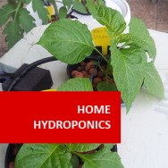 Home Hydroponics 100 Hours Course