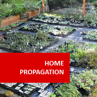 Home Propagation 100 Hours Course