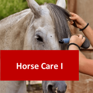 Horse Care I 100 Hours Certificate Course
