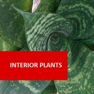 Interior Plants (Indoors) 100 Hours Certificate Course