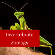 Invertebrate Zoology 100 Hours Certificate Course