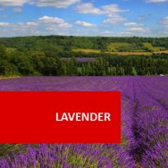Lavender 100 Hours Certificate Course