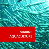 Marine Aquaculture 100 Hours Certificate Course