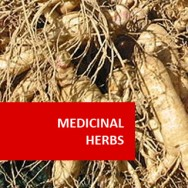 Medicinal Herbs 100 Hours Certificate Course