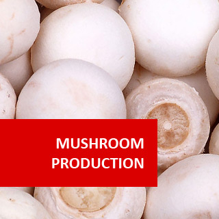 Mushroom Cultivation 100 Hours Certificate Course
