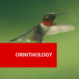 Ornithology 100 Hours Certificate Course