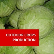 Outdoor Plant Production (Crops I)
