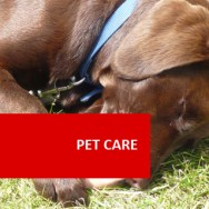 Pet Care 100 Hours Certificate Course
