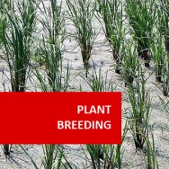 Plant Breeding 100 Hours Certificate Course