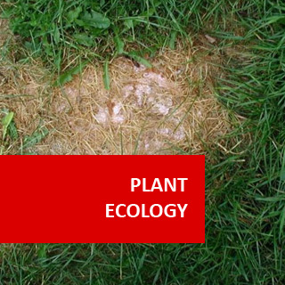Plant Ecology 100 Hours Certificate Course
