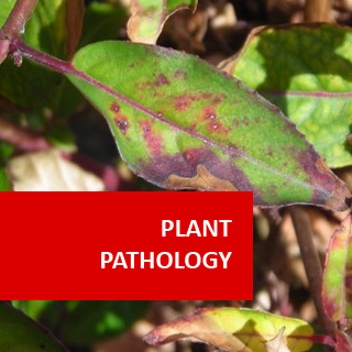 Plant Pathology 100 Hours Certificate Course