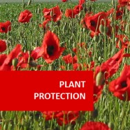 Plant Protection 100 Hours Certificate Course