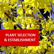 Plant Selection And Establishment