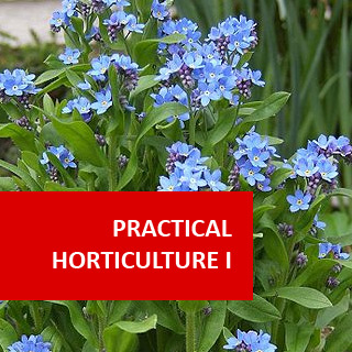 Practical Horticulture I 100 Hours Certificate Course