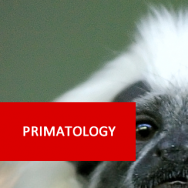 Primatology 100 Hours Certificate Course