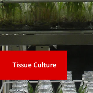 Tissue Culture 100 Hours Certificate Course