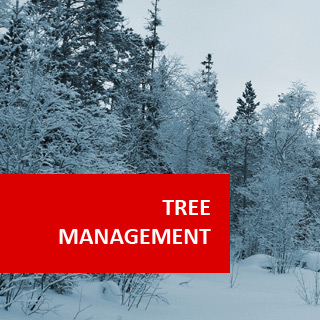 Trees For Rehabilitation (Tree Health Management) 100 Hours Certificate Course